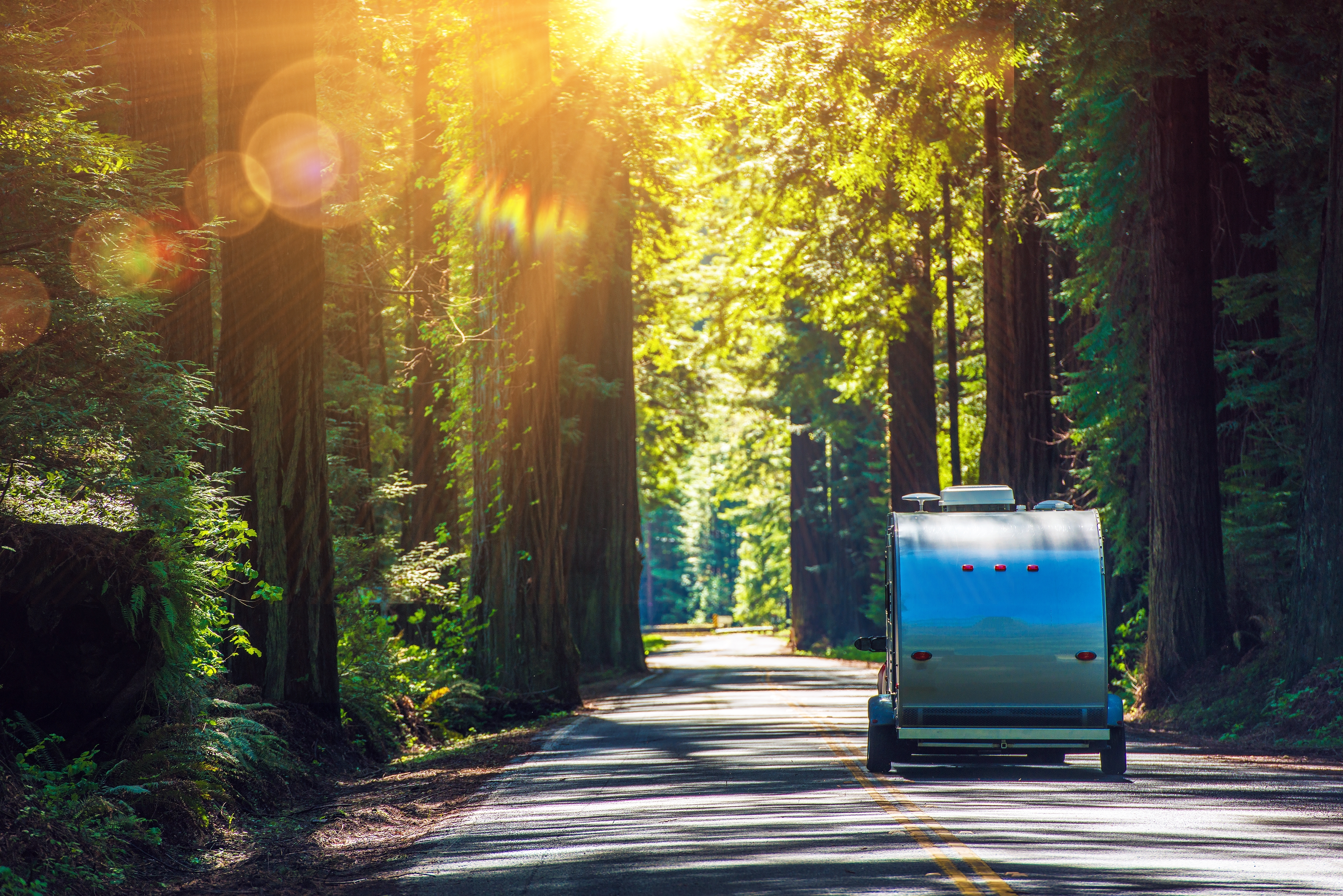 camper-on-road-in-forest